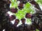 Summer Camp excitement for Wiltshire Army Cadets